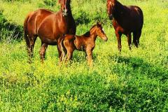 animali-agriturismo-biologico-tratalias-02