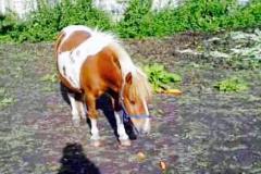animali-agriturismo-biologico-tratalias-07