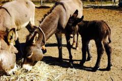 animali-agriturismo-biologico-tratalias-09